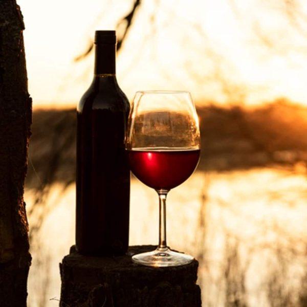 Tannat Originel -Exclusivité Chez Madiran - viisite des vignes Préphylloxériques