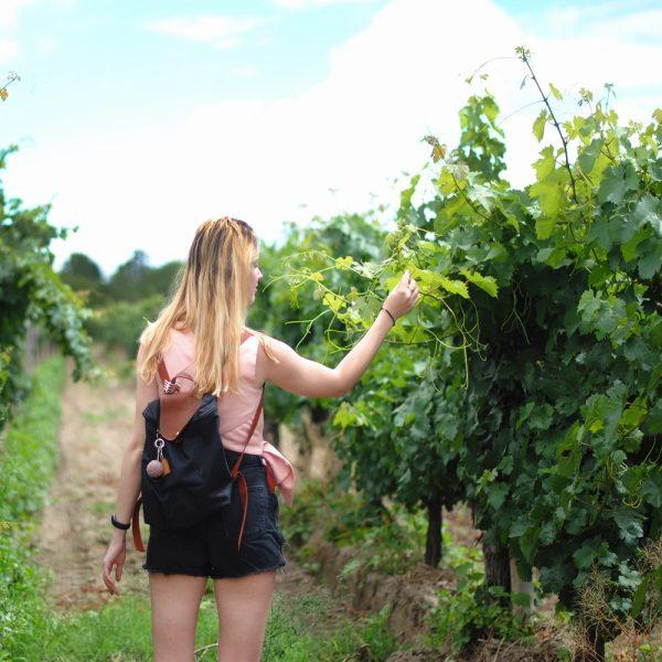 Visite et dégustation dans les vignoble de Madiran